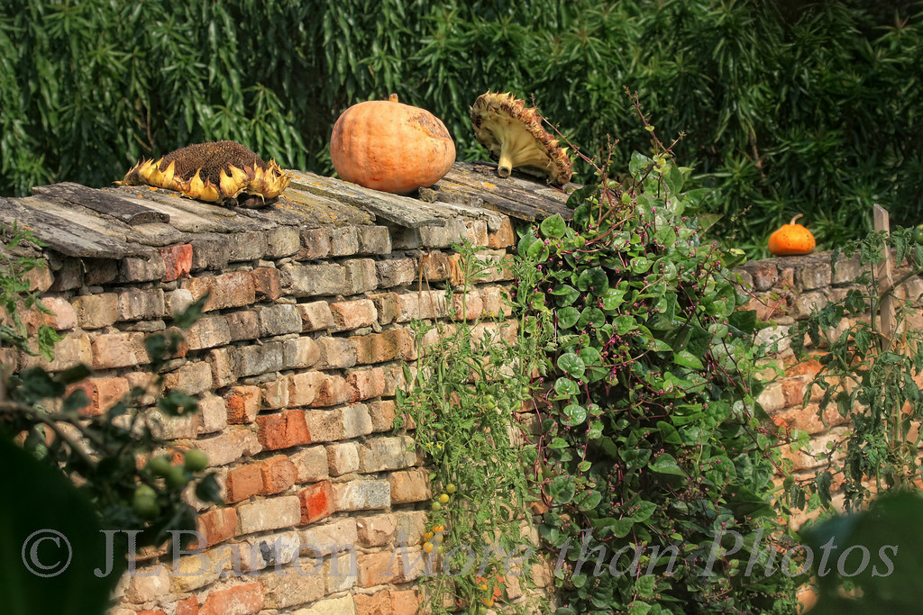 Autumn in the Garden A part of the wall to the 'kitchen garden' at the Schlosshof palace on Austria's eastern border