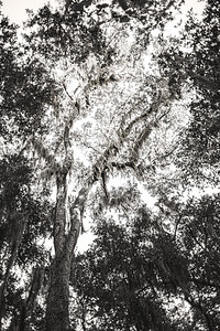 Tree Copyright 2021 Steve Leimberg UnSeenImages Com L1001183