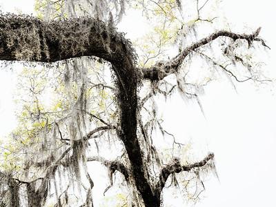 Tree 7 Copyright 2018 Steve Leimberg UnSeenImages Com _DSF4148