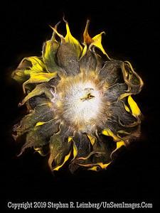 Back of Sunflower - PAINTING Copyright 2018 Steve Leimberg UnSeenImages Com 2018-08-06 16-26-08 (A,Radius8,Smoothing4)