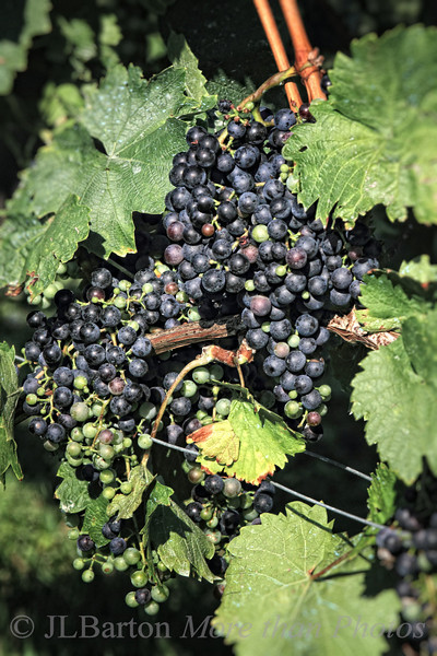 Not quite harvest time