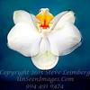 Orchid a Float - XxXYDt jUST PRETTY Copyright 2016 Steve Leimberg - UnSeenImages Com _Z2A4645_DxO