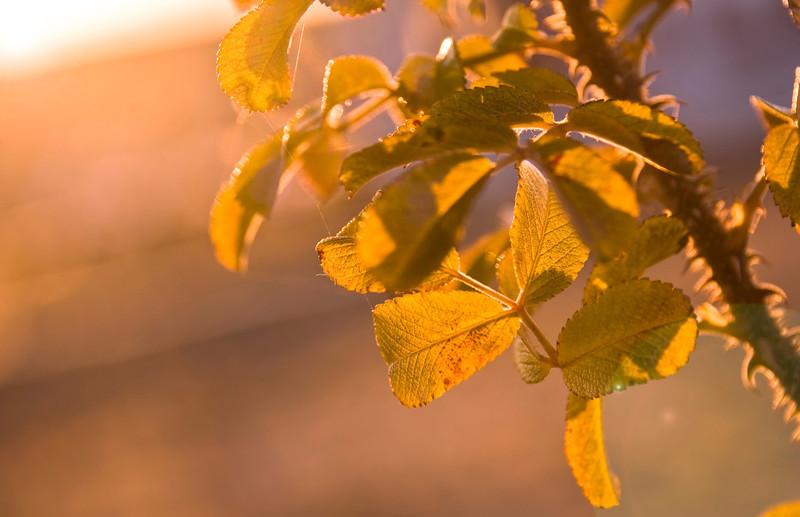 Flora Sunrise 11