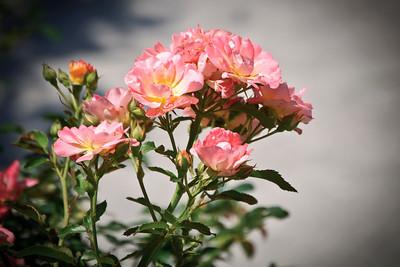 Flowers_DSC1398