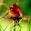 Birds8August 25, 2006DeLoyd Huenink3456 x 2304