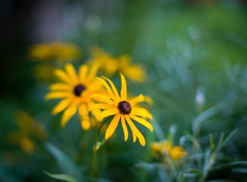 8 10 Flower 3