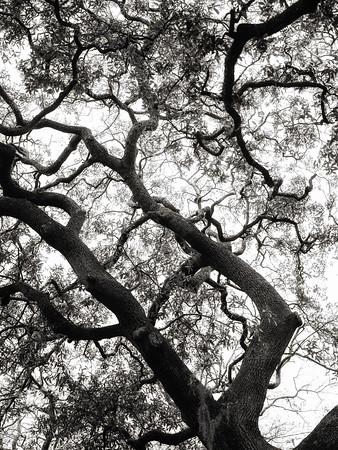 Tree 2 - Copyright 2018 Steve Leimberg UnSeenImages Com _DSF3991