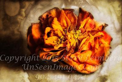 Dead Flower - Copyright 2017 Steve Leimberg - UnSeenImages Com 2017-02-16 22-39-51 (C)