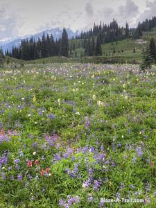 Naches Loop Trail at Chinook Pass, Mt. Rainier National Park  (August 2013)