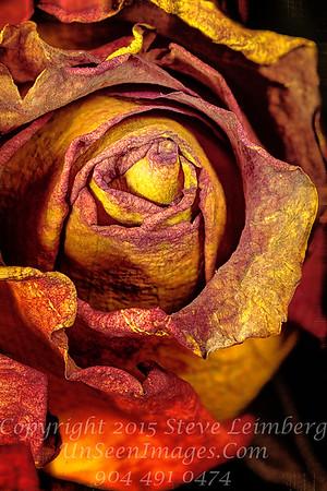 Wilted Flowers Copyright 2016 Steve Leimberg - UnSeenImages Com 2016-12-13 15-51-16 (C)