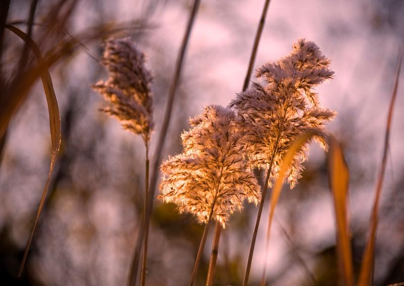 Flora Sunrise 02