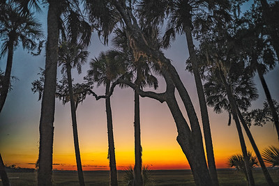 Sunset Through Trees Copyright 2020 Steve Leimberg UnSeenImages Com L1020890