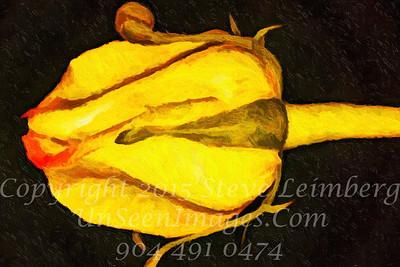 Yellow Flower - Copyright 2017 Steve Leimberg - UnSeenImages Com 2017-01-11 14-41-05 (C)