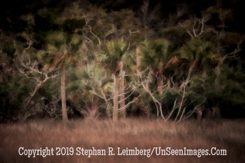 Marsh Trees from 2 Red Cedar - Copyright 2014 Steve Leimberg - UnSeenImages Com _H1R4600