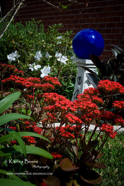 blue gazing ball garden kalanchoe red flower