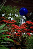 blue gazing ball garden kalanchoe red flower