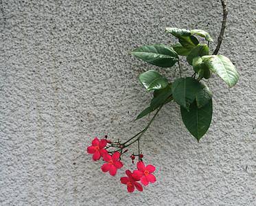 7251 Blossoms