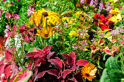 Flowers_DSC1380