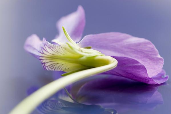 May Violet