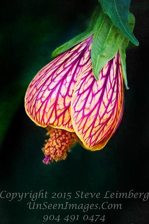 Stunning Flower - PAINTING - Copyright 2016 Steve Leimberg - UnSeenImages Com _Z2A1657