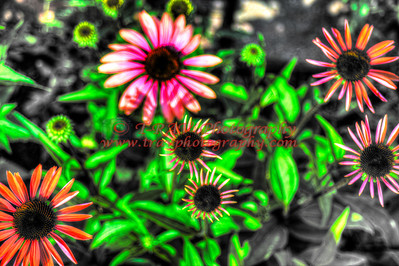 Neon Daisies changing colors