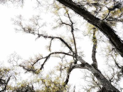 Tree 9 Copyright 2018 Steve Leimberg UnSeenImages Com _DSF4158