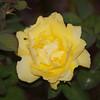 gelb ein
