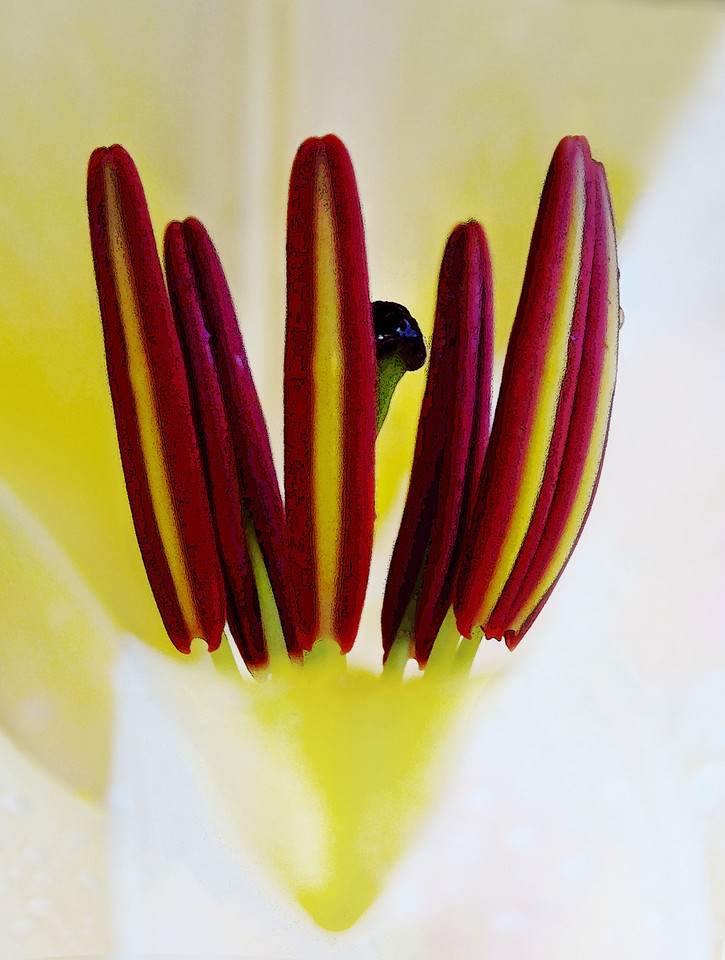 flowers  winnipeg photography, chrismcwilliamsphotography