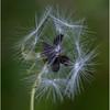 Flowering weed