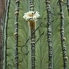 Between thorns