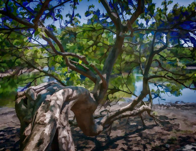 Tree & Lake (1 of 1)