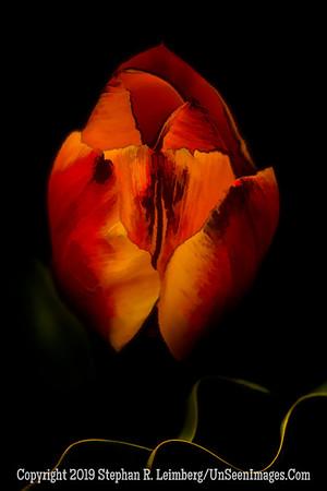 Rocket Red Flower 20130415_1958