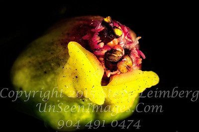 Pointsetta Flower - Copyright 2016 Steve Leimberg - UnSeenImages Com 2016-12-19 15-47-11 (A,Radius8,Smoothing4)