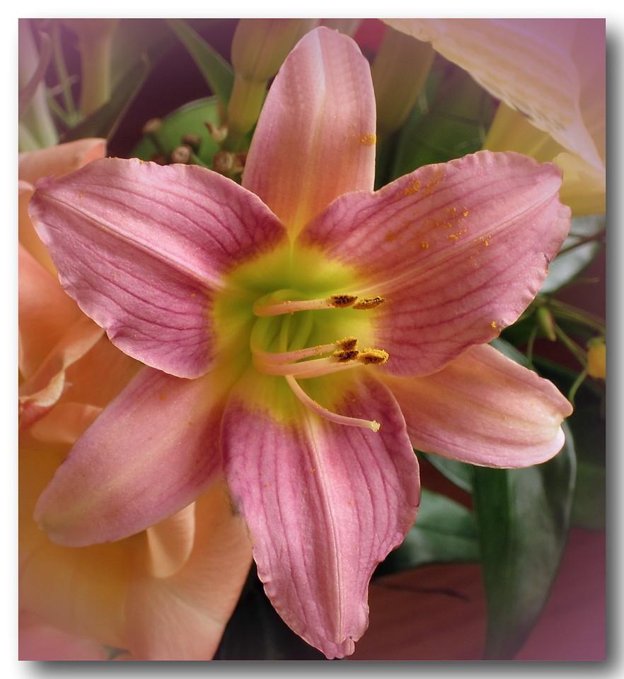 Day Lily 2011