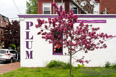 Flowering tree next to Plum