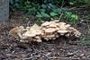 Mushroom convention!