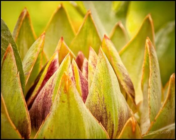 Artichoke Flower Bud
