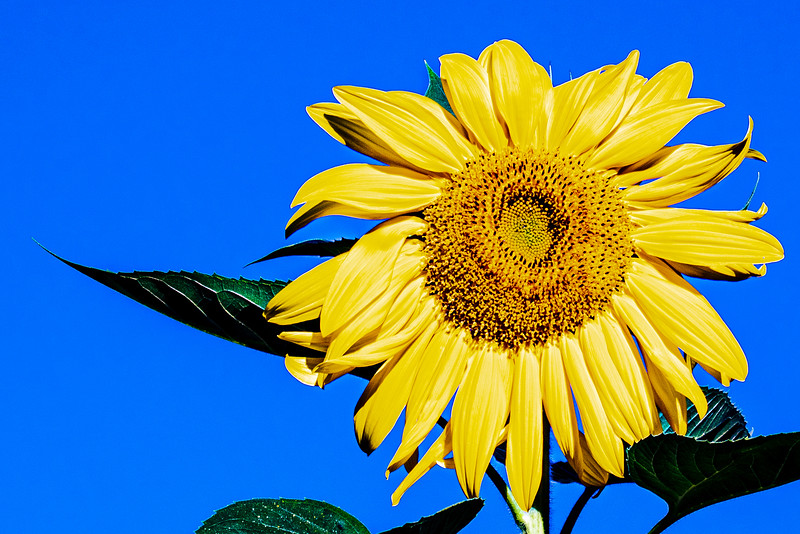Caroline's Flower