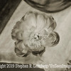 Peony on Table - PAINTING - B&W Copyright 2015 Steve Leimberg - UnSeenImages Com _Q2Q2191