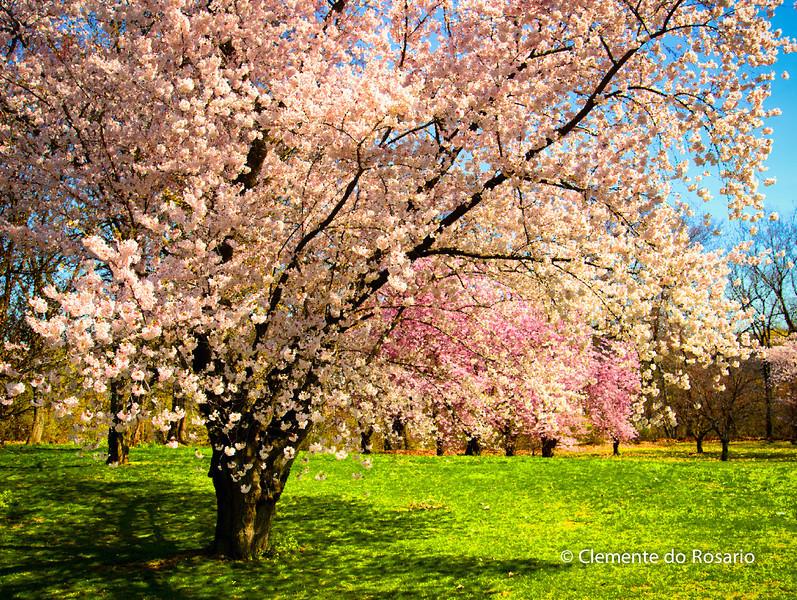 File Ref: 2013-05-06-RGB Spring 01