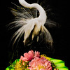 Flowers and SkyPointer - Copyright 2015 Steve Leimberg - UnSeenImages Com _Q2Q2346