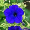 DSC01919_false_blue