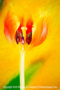 Peeking Tulip  PAINTING Copyright 2018 Steve Leimberg UnSeenImages Com 2018-07-30 16-55-25 (A,Radius8,Smoothing4)