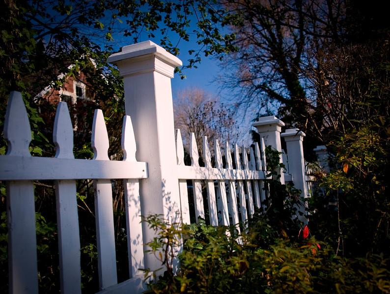 2012_11 Backyard Flora 22