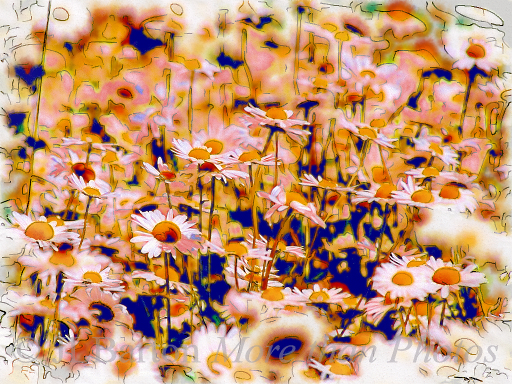 Summer flowers along the canalside