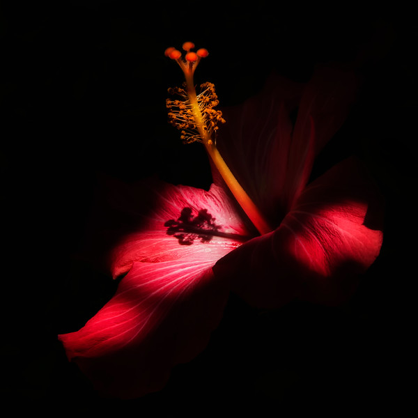 flowers, plants, Sunken Gardens