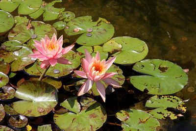 Lilly Pad Pond In Acadia National Park, Bar Harbor, Maine #2707