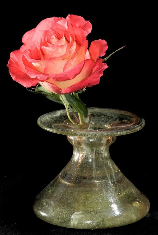 """Lipstick"" rose"