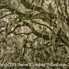 Preserve - Don't Breat This Bough -PAINTING  Copyright 2015 Steve Leimberg - UnSeenImages Com  - _M1A9151