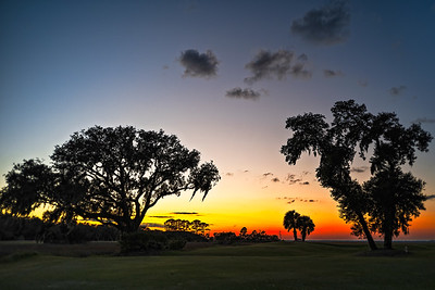 Trees on Golf Course Copyright 2020 Steve Leimberg UnSeenImages Com L1020876
